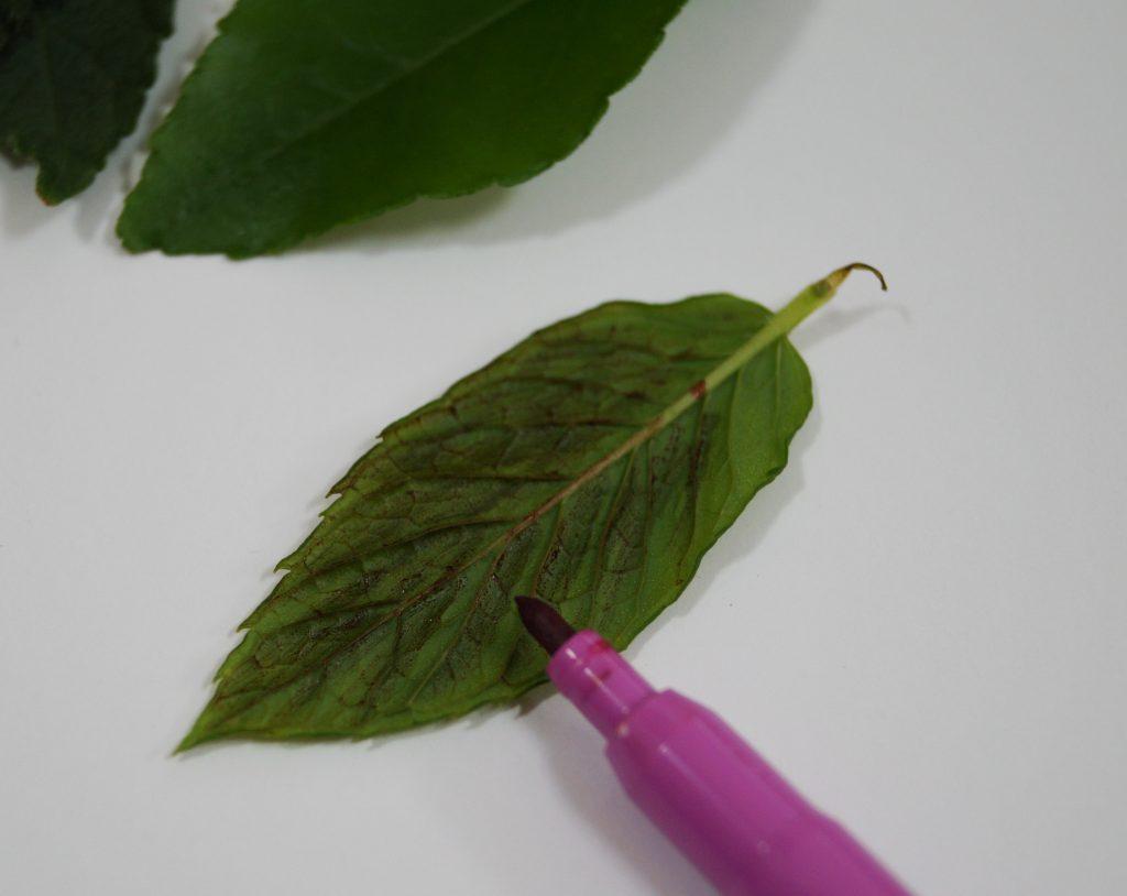 Blätter Bilder Filzstift